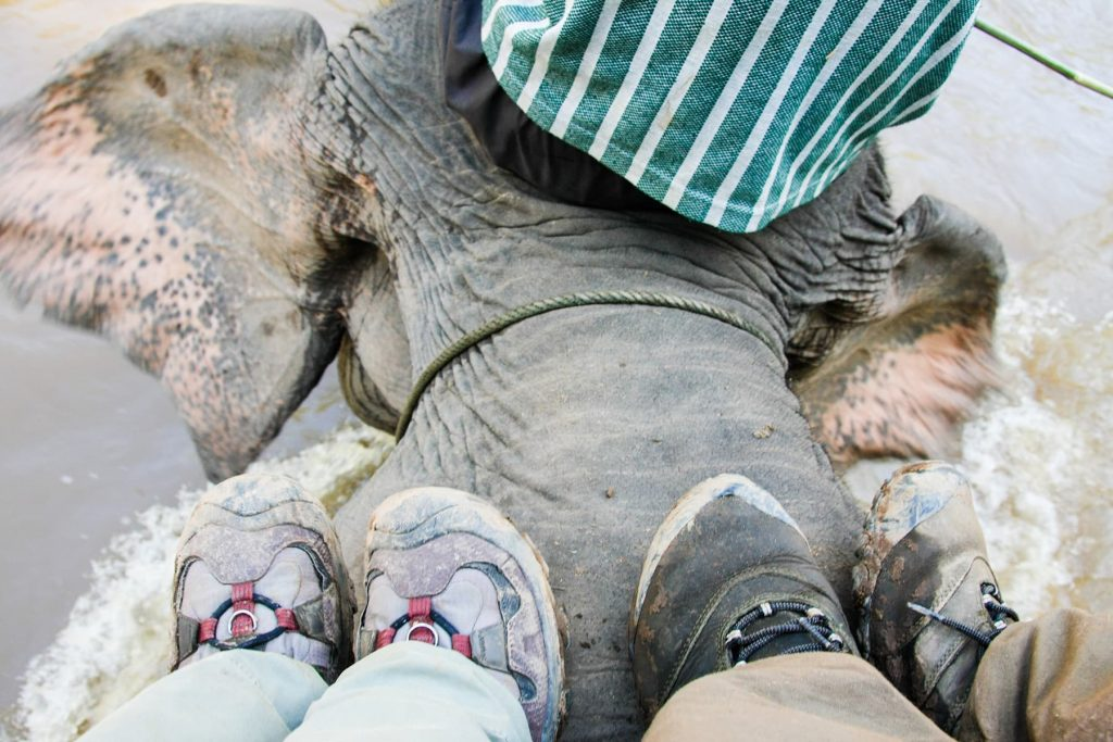 picture of feet riding on an elephant