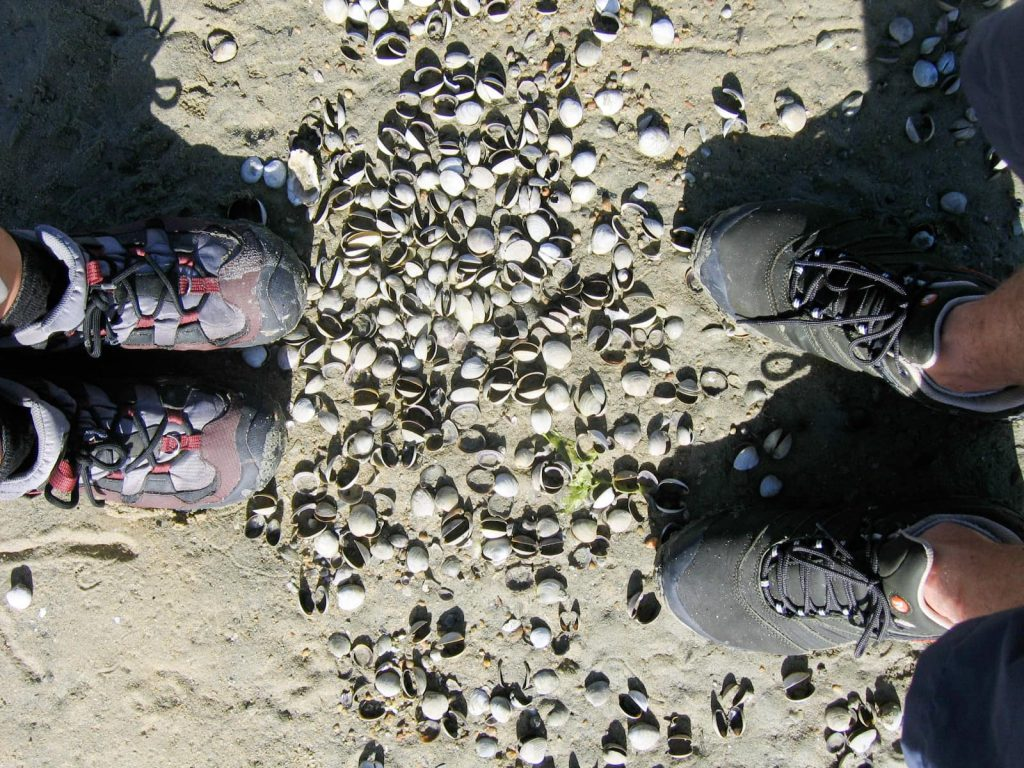 feet surrounded by clams on the beach
