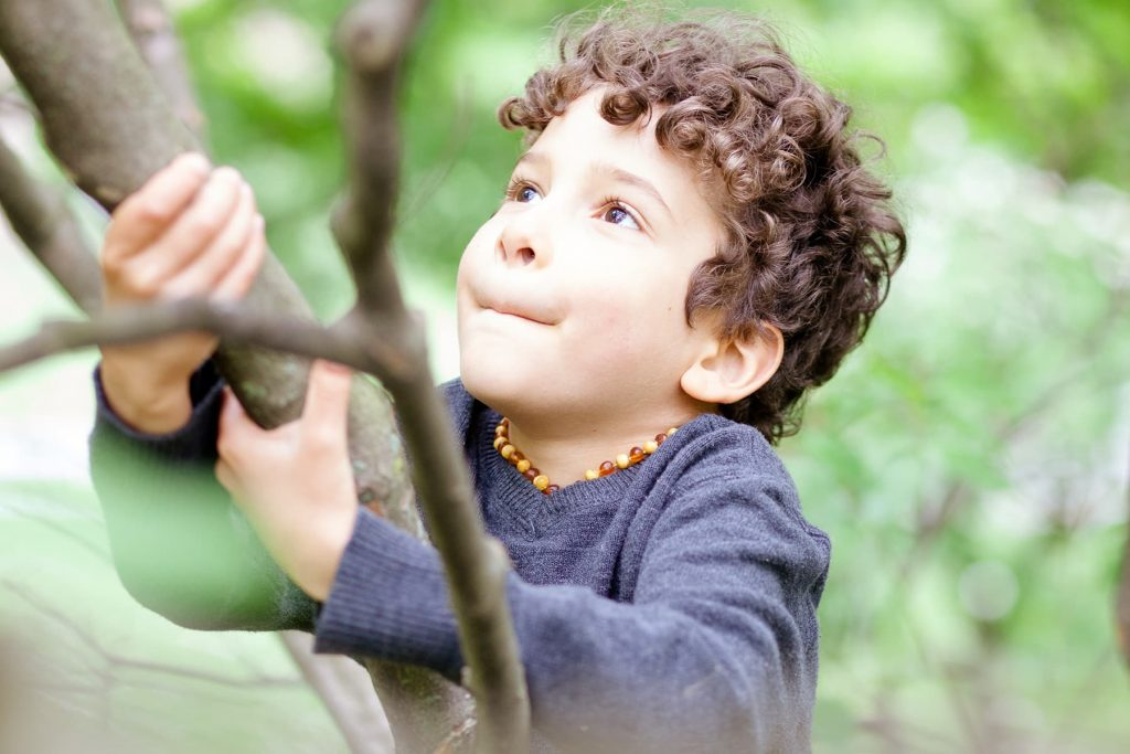 young boy climbing a tree in Highland Park