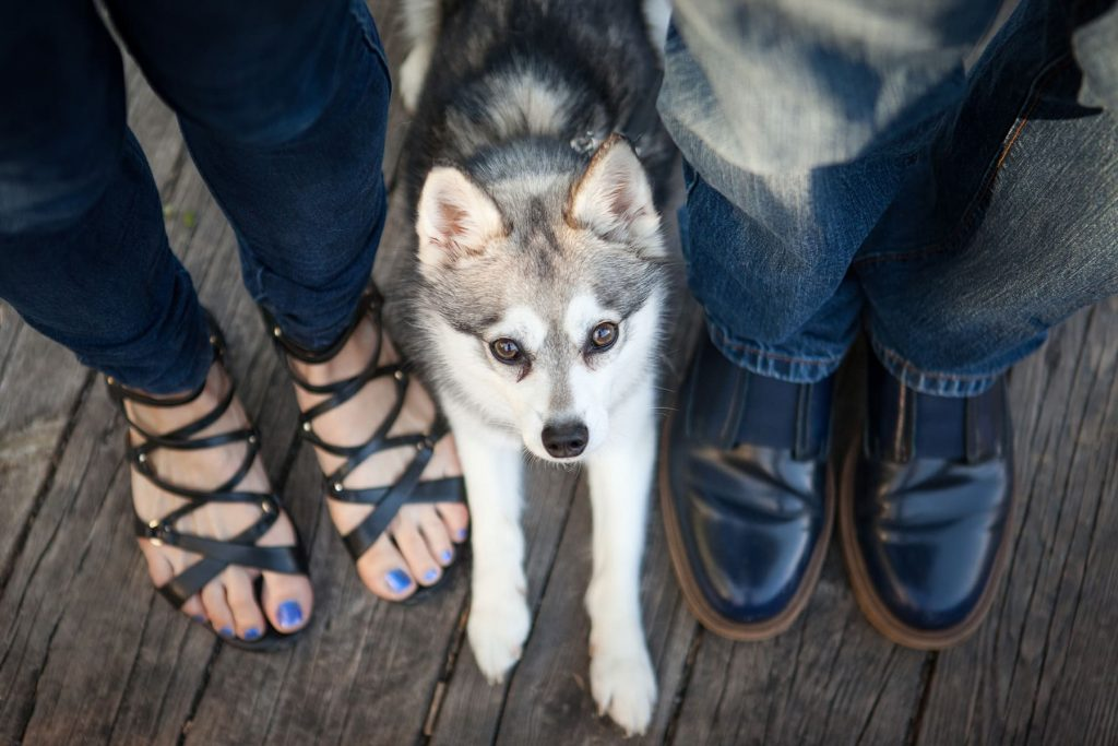 picture of bride and grooms feet before their wedding, with their pet in Rochester, NY