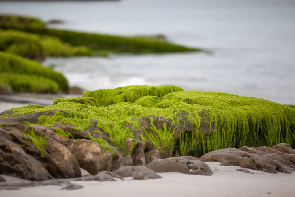 moss covered stones along the beach and water