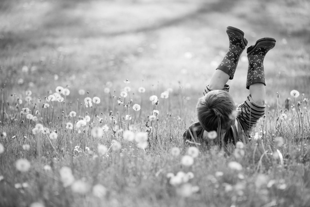 boy rolls in the dandelions during this spring photo shoot