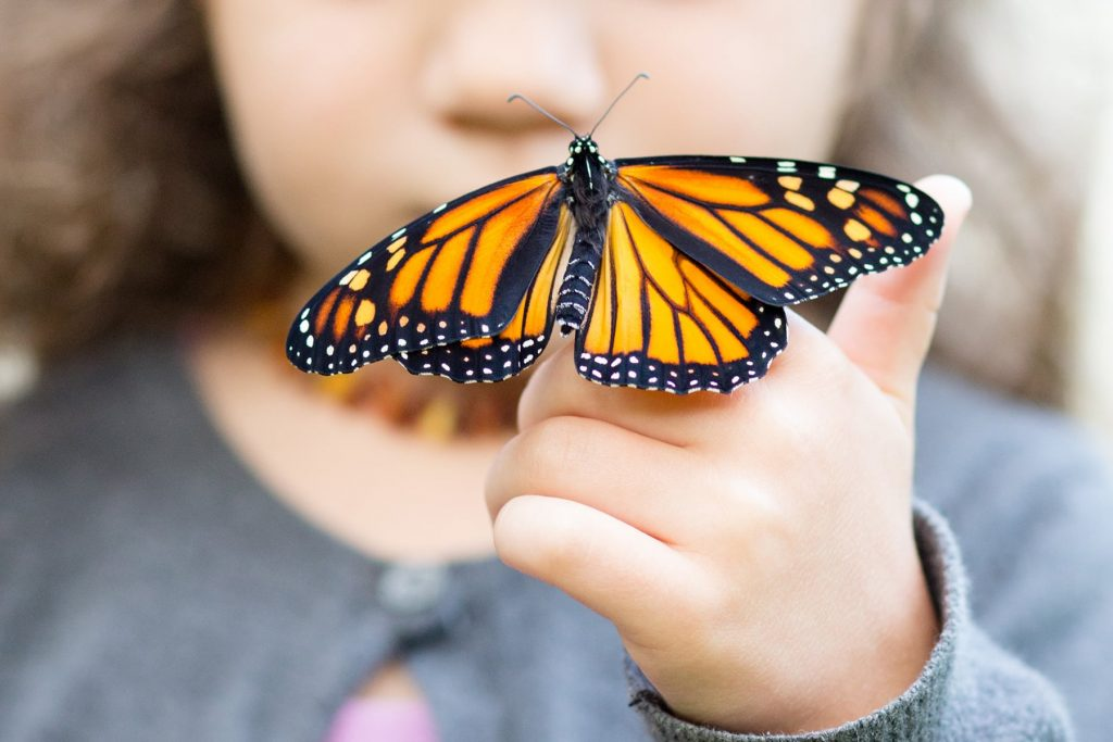 a child holds a new baby monarch butterfly