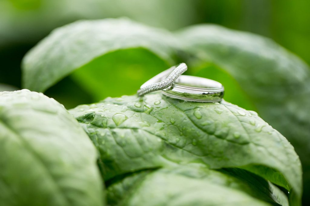 rings sitting on spinach that has water drops on it